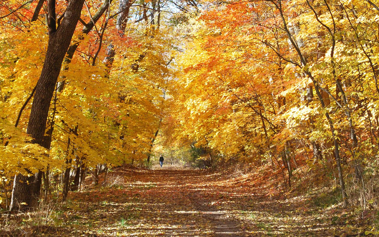 Fall_Banner01
