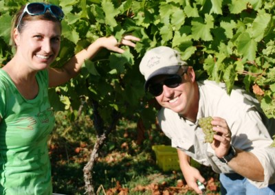 Grape-Harvest-at-Jowler-Creek-crop