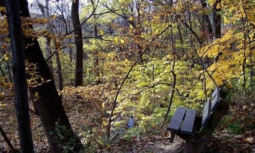 Parkville-Nature-Sanctuary