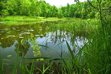 Little Bean Marsh Conservation Area